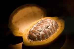 Baya del cacao abierta blog del chocolate