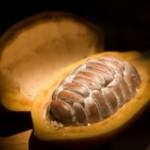 Elaboración del chocolate